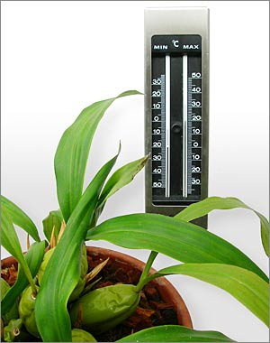 The right temperature is important for orchids